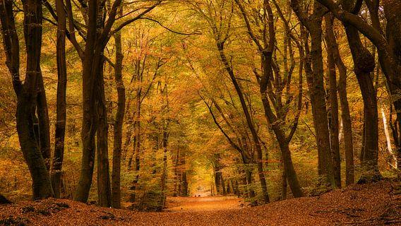 Het bos met de dansende bomen