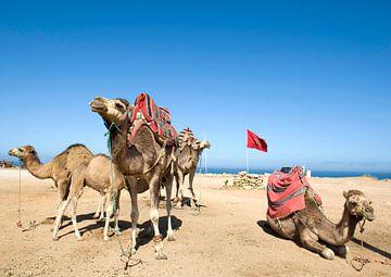 Marokko0036 van