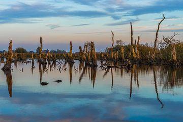 Nationalpark De Alde Feanen bei Earnewald (Eernewoude) von Annie Jakobs
