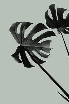Monstera Teal 09, 1x Studio III