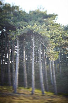Nederlands sprookjes bos  in de duinen van Karel Ham