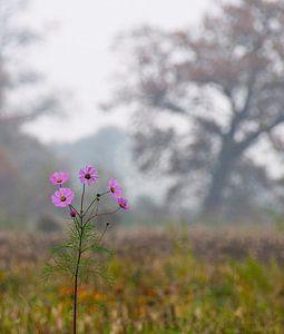 Herbstliche Landschaft von Marijke Keijser