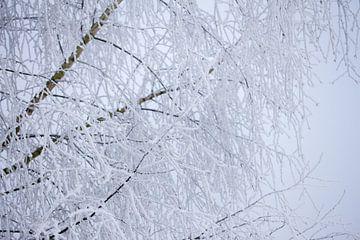 Makrobild von Zweigen mit Schnee bedeckt von Karijn Seldam