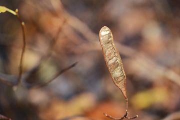 Or d'automne sur Emi Barendse