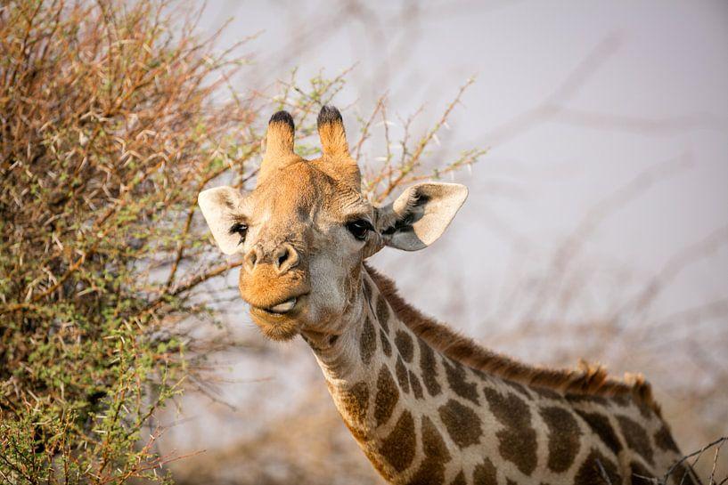 Giraffe van Thomas Froemmel