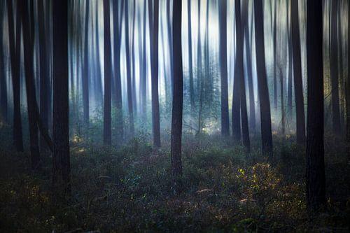 misterieus bos