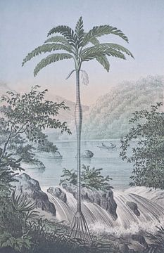 Tropisch landschap bij de waterval van Andrea Haase