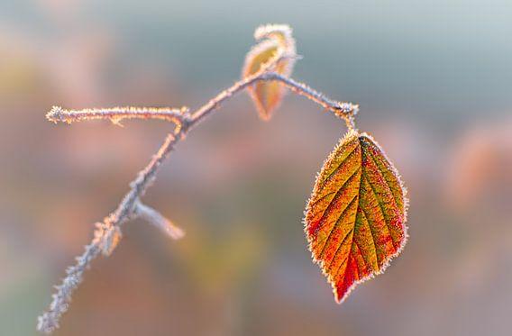 Koude november ochtend van Christa Thieme-Krus