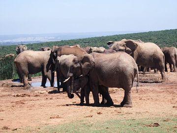 Knuffelende olifanten van Robin van Tilborg