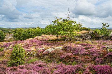 Landschaft auf der Insel Tjörn in Schweden von Rico Ködder