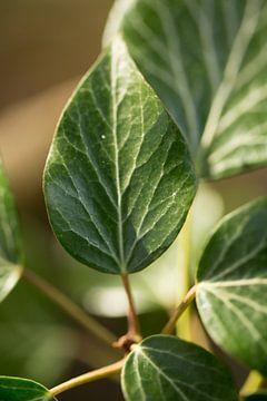 Botanische Fotokunst einer grünen Pflanze von Karijn | Fine art Natuur en Reis Fotografie