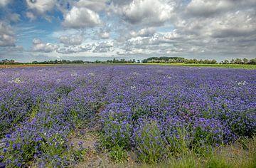 Bloemenzee op Walcheren van Lisette van Peenen