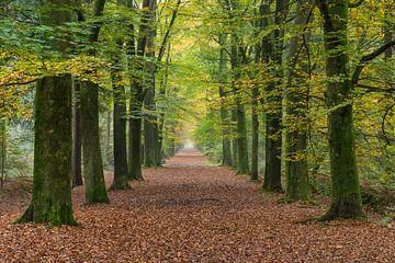 herfst19 van Geertjan Plooijer