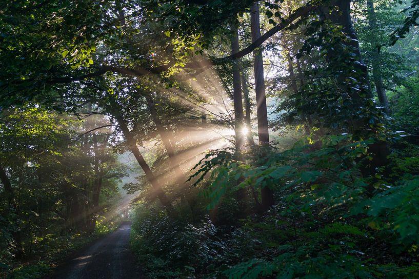 Magisches Licht im Wald von Adriana Mueller