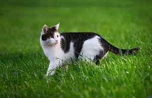 Huiskat in het gras van Heike Hultsch
