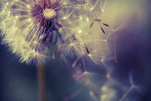 Pusteblume Fliegende Schirmchen van Julia Delgado