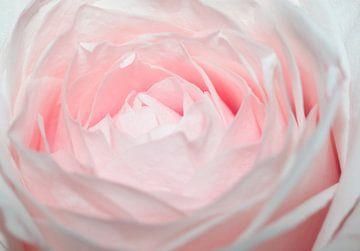 pink panter van William Haddock