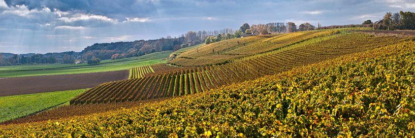 Weingut Der Apostelhof bei Maastricht von Frans Lemmens