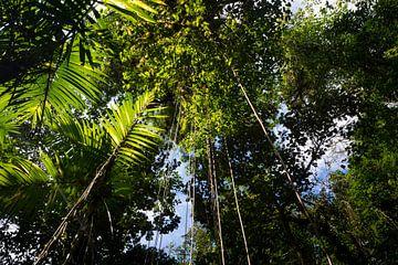Tropisch regenwoud met groene hangende vegetatie en planten van Michiel Dros