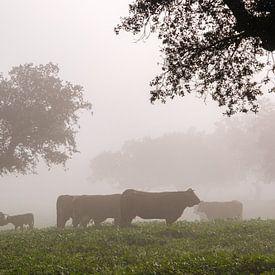 Koeien in de mist van Joke Beers-Blom