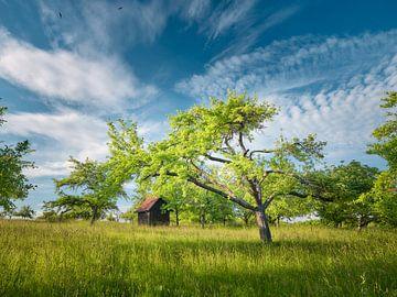 Vroeg in de zomer op de weide boomgaard van Max Schiefele