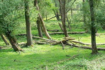Bäume im Wald von Kristof Leffelaer