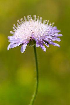 Wild flower sur RWNL Fotografie