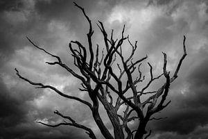 Dode boom tekent af tegen donkere wolken