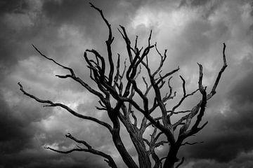 Arbre mort en face de sombres nuages sur