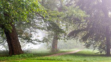 Morgen im nebligen Wald von Michel Knikker