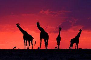 Magic Masai Mara - WNF Coverfoto 2017 Frans Lanting Award van