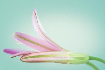 Close up paarse bloemetjes in pasteltinten van Natascha Teubl