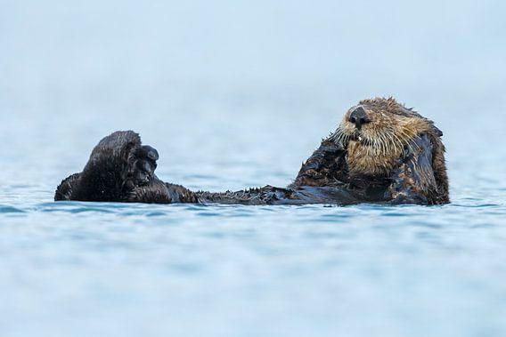 Sea otter von Menno Schaefer