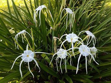 flowers von Mike Gatting