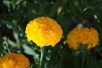 gele plant von Bart Cornelis de Groot