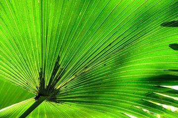 Green leaf 1 von Hans Lunenburg