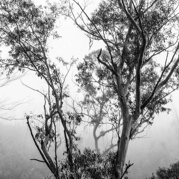 Regenwoud in de mist IV van Ines van Megen-Thijssen
