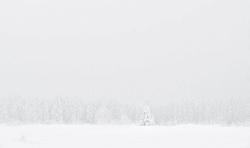 Winterbaumgrenze von Raoul Baart