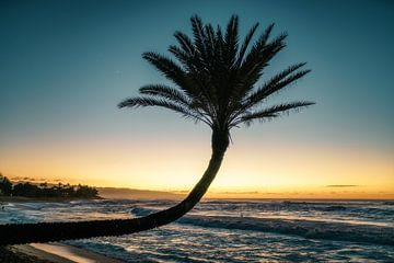 Hawaii Palmbomen van road to aloha
