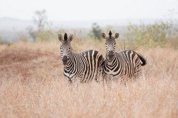 Zebra's sur Riana Kooij