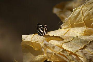 Vlinder op kleedje  van Eva Toes