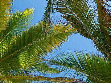 Palmen und blauer Himmel von Moniek van Rijbroek