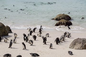 Pinguïns op het strand in Zuid-Afrika van Reis Genie
