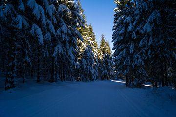 Dennenbomen in de sneeuw von Andrea Ooms