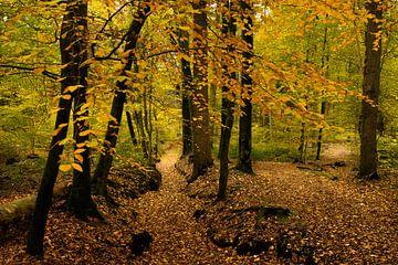 Herbstlandschaft Bekendelle bei Winterswijk von Marianne van der Zee