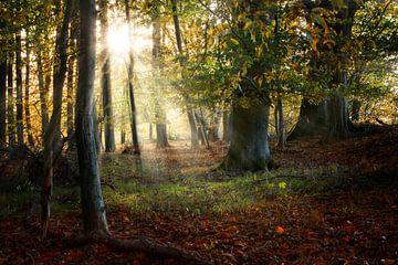 mooi oud bos in de herfst met zonnestralen, natuurlijke achtergrond, geselecteerde focus van Maren Winter