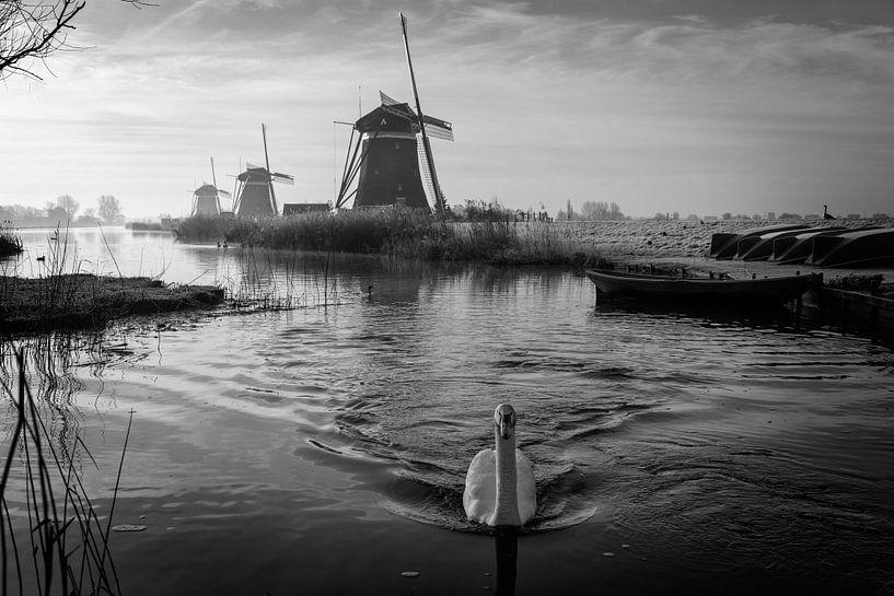 Zwaan met molendriegang in zwart-wit van iPics Photography