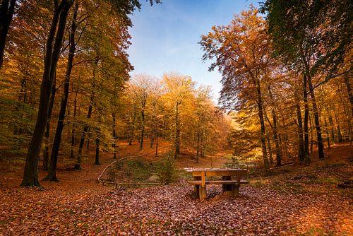 Bankje in herfst bos