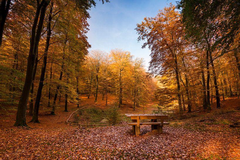 Bankje in herfst bos van Fotografie Egmond