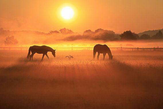 2 paarden en 1 blauwe reiger